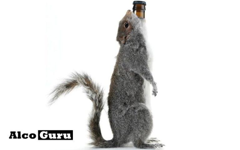 сортов пива